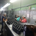 Assembly Workers at the Tattoo Tequila Factory